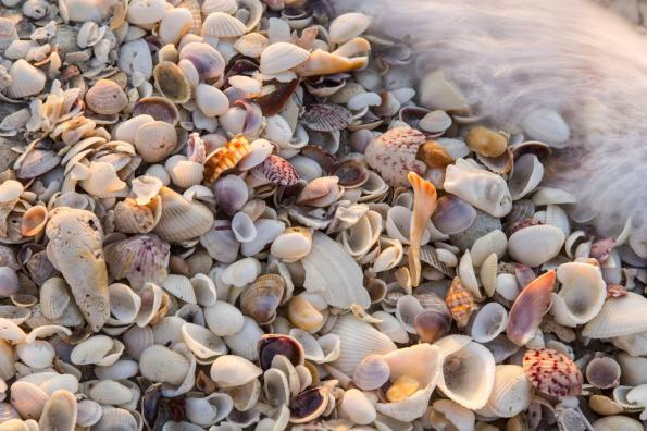 Using Oyster Shell in Your Garden
